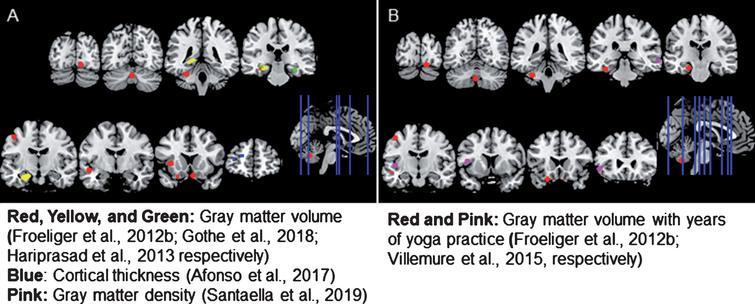 Yoga activates the logical brain