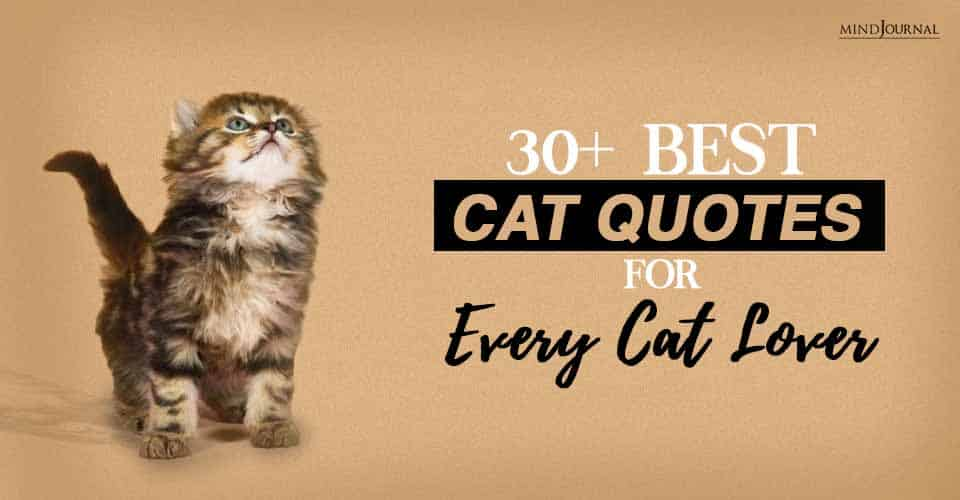 Best cat quotes for every cat lover
