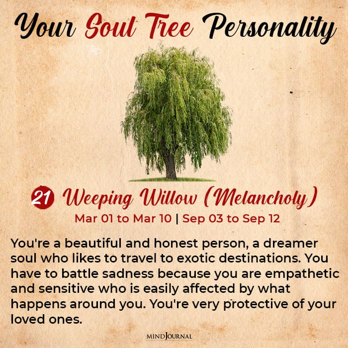 soul tree astrology willow