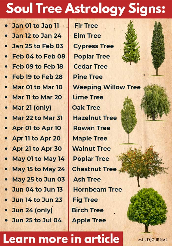 soul tree astrology infographics