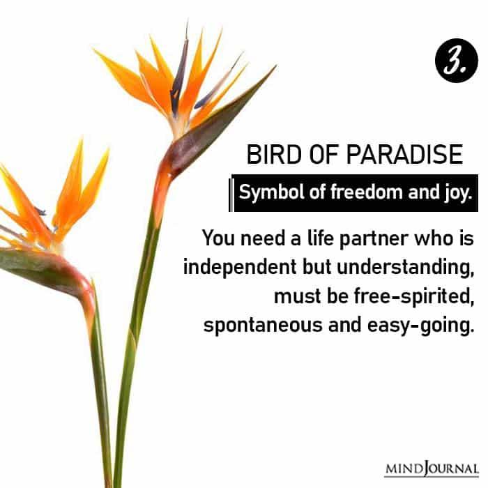 Choose Flower Reveals Love Life bird of paradise