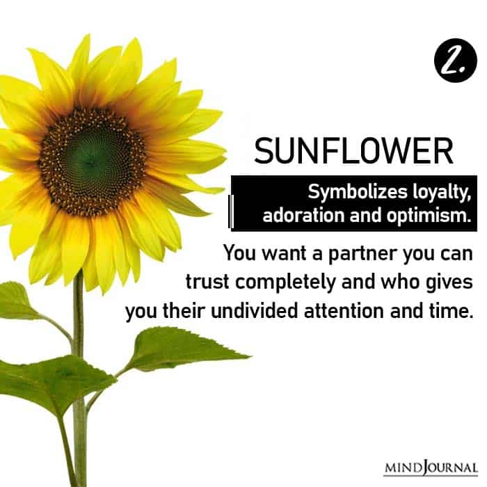 Choose Flower Reveals Love Life sunflower