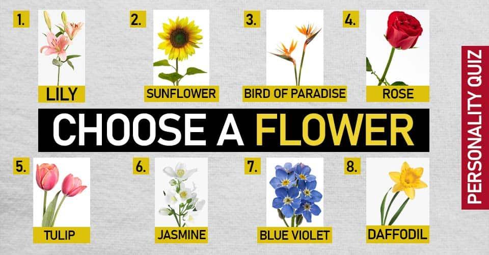 Choose Flower Reveals Love Life