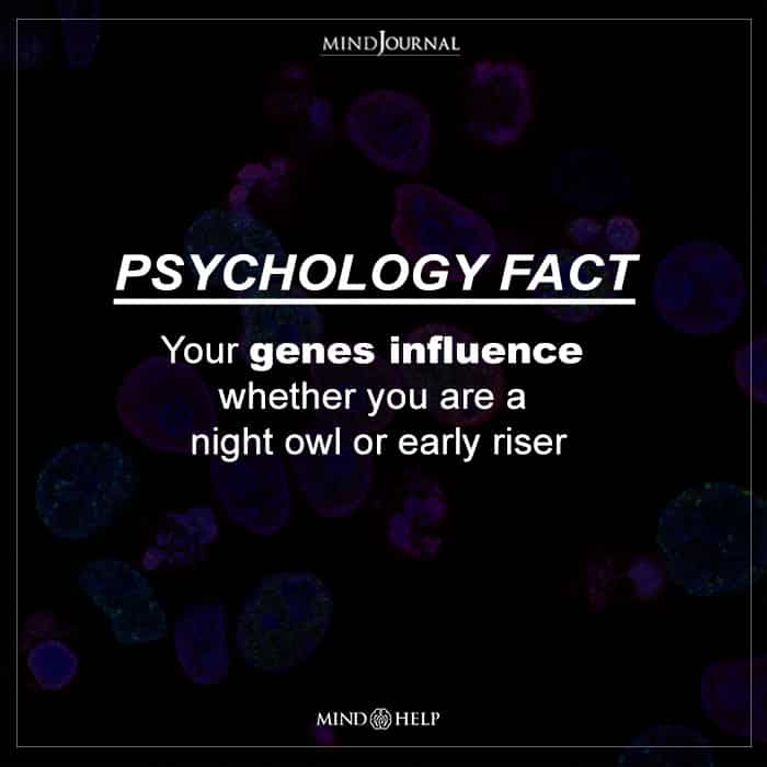 Your genes influence whether you are a night owl or early riser.