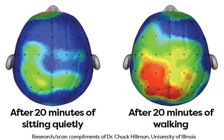 Active brain versus inactive brain.