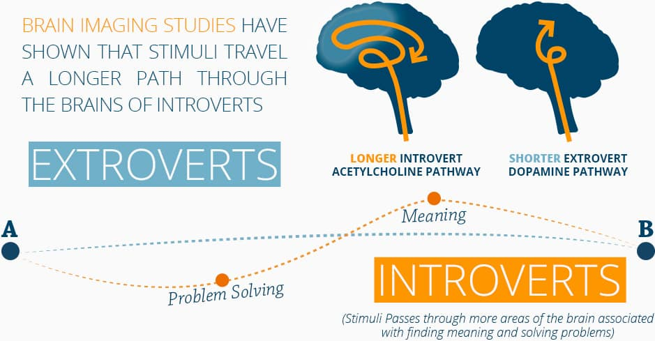 Extroverts have a shorter dopamine pathway and introverts have a longer acetylcholine pathway.
