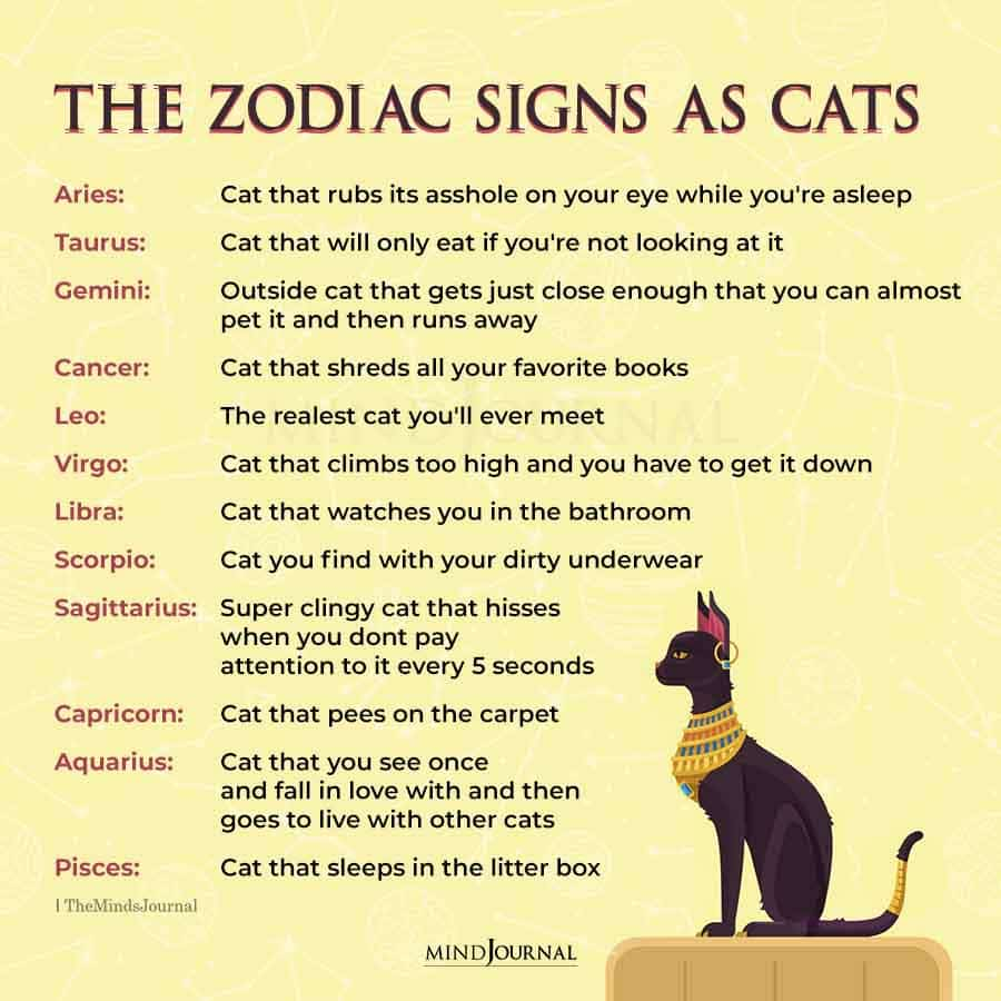 zodiac signs as cats