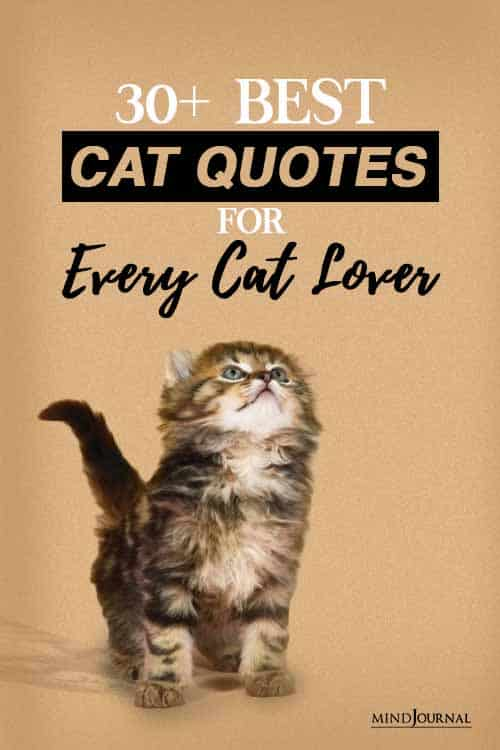 Best cat quotes for every cat lover PIN