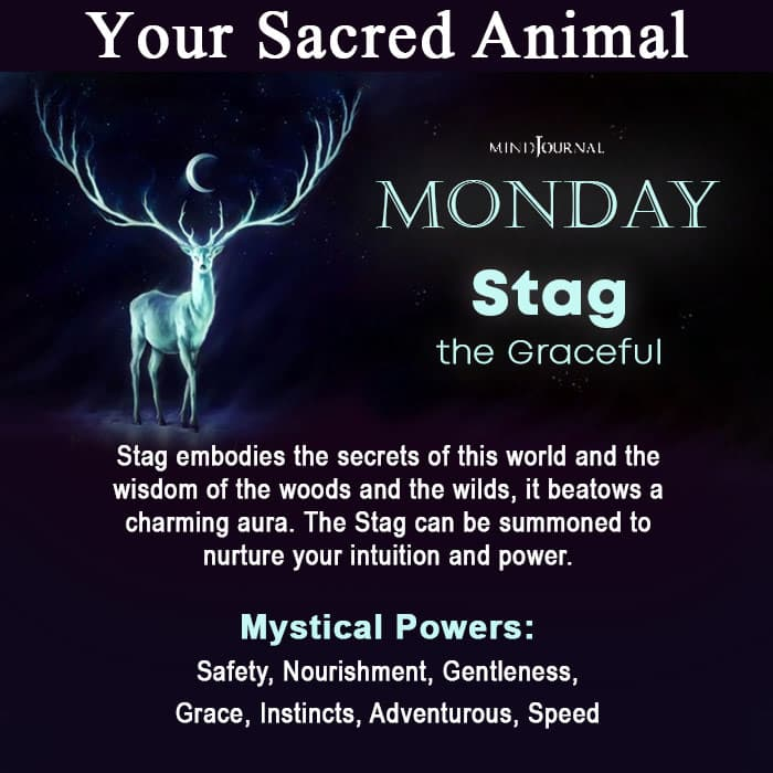 Sacred Animal Of Your Day Of Birth Monday