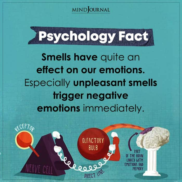 Smells Have Quite An Effect On Our Emotions